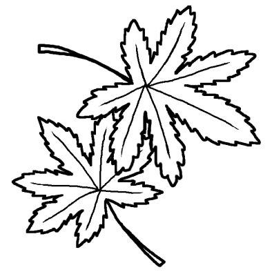 モミジ(紅葉)1/秋の花/無料【白黒イラスト素材】